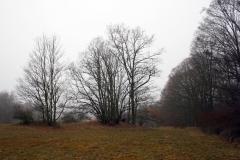 002 stromy