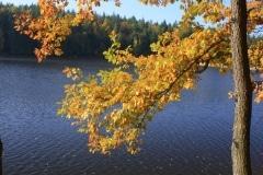 IMG_3761 strom web